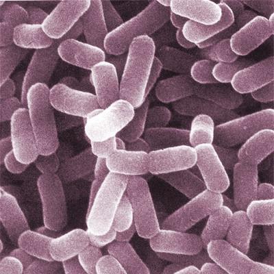 Oralni probiotik štiti vaginalnu floru
