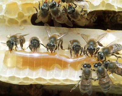 Tajne pčelinjih proizvoda