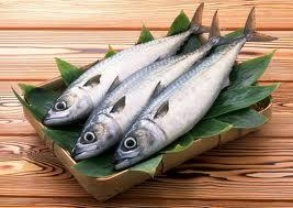 Da li je bolja riba ulovljena u moru ili uzgojena riba?