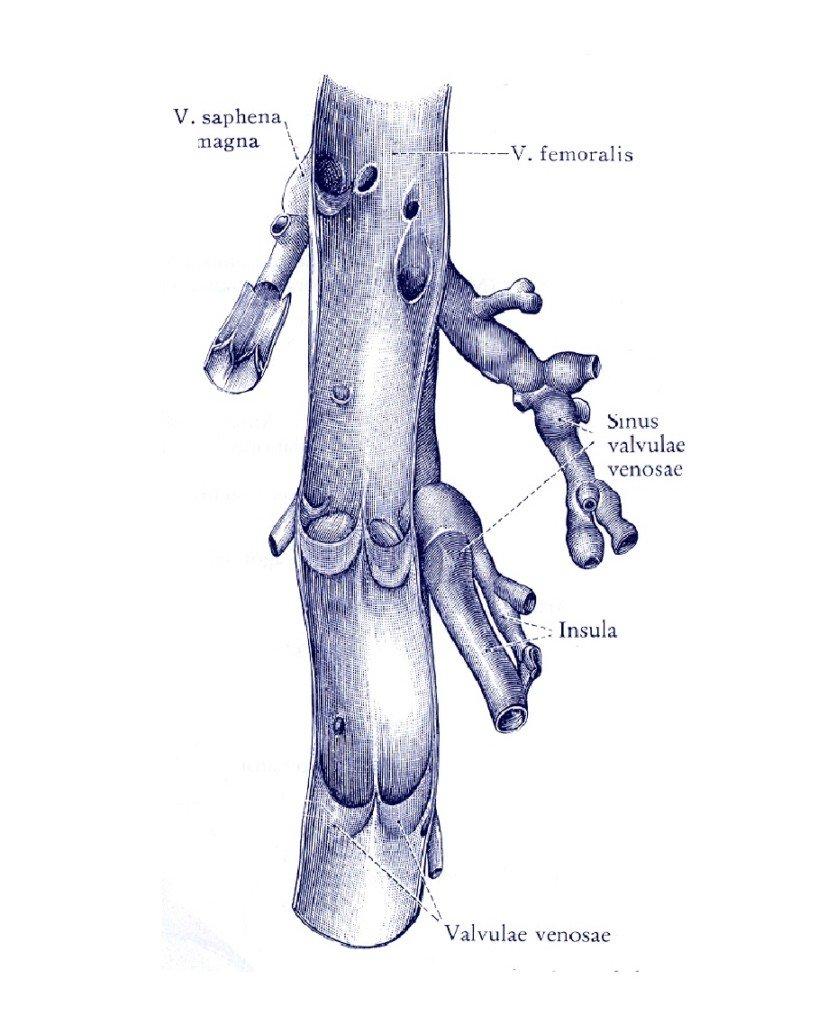 Tromboza dubokih vena