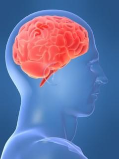 Ljudski mozak dnevno obradi 100.000 reči