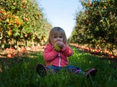 Šta i kako dati detetu koje ima dve godine? Da li je problem ako neće da jede ili ako odbija pojedine namernice? Saznajte više o ishrani dvogodišnjaka.