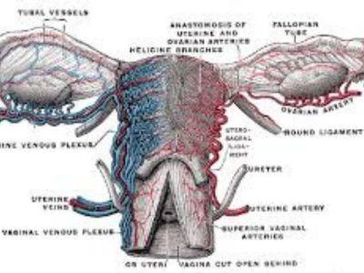 Salpingitis predstavlja zapaljenje jajovoda. Vrlo retko nastaje samostalno, već najčešće zajedno sa zapaljenjem jajnika (oophoritis), što se naziva i adnexitis.