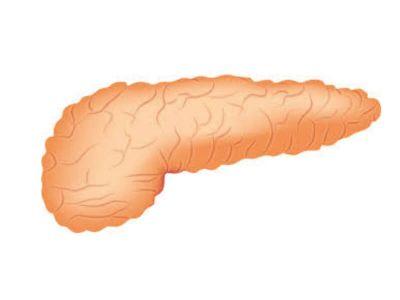 Akutni pankreatitis nastaje kada enzimi počinju da vrše autodigestiju pankreasa, odnosno razaranje ove žlezde. Bolest se uz adekvatnu terapiju sanira, a funkcija pankreasa posle izvesnog vremena vraća u normalu.
