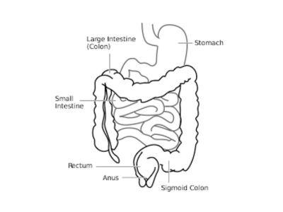 Duodenum je, posle kolona, najčešće mesto lokalizacije divertikuluma u digestivnom traktu. Divertikulumi duodenuma su kesasta izbočenja van zida duodenuma (retko u lumen) koja su povezana sa lumenom preko otvora i vrata divertikuluma.