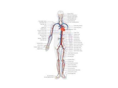 Dresslerov sindrom predstavlja postinfarktni sindrom. Posle infarkta može doći do stvaranja antitela na antigene srčanog mišića.