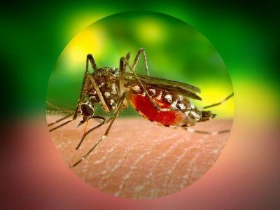 Denga je akutno infektivno oboljenje iz grupe hemoragijskih groznica koje se karakteriše bifazičnom temperaturom praćenom artralgičnim i hemoragijskim sindromom.