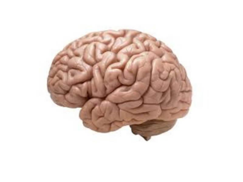 Oblast u mozgu, veličine malog metalnog novčića, odgovorna je za postojanje želje za cigaretom, objavljeno je u u časopisu 'Sajans'.