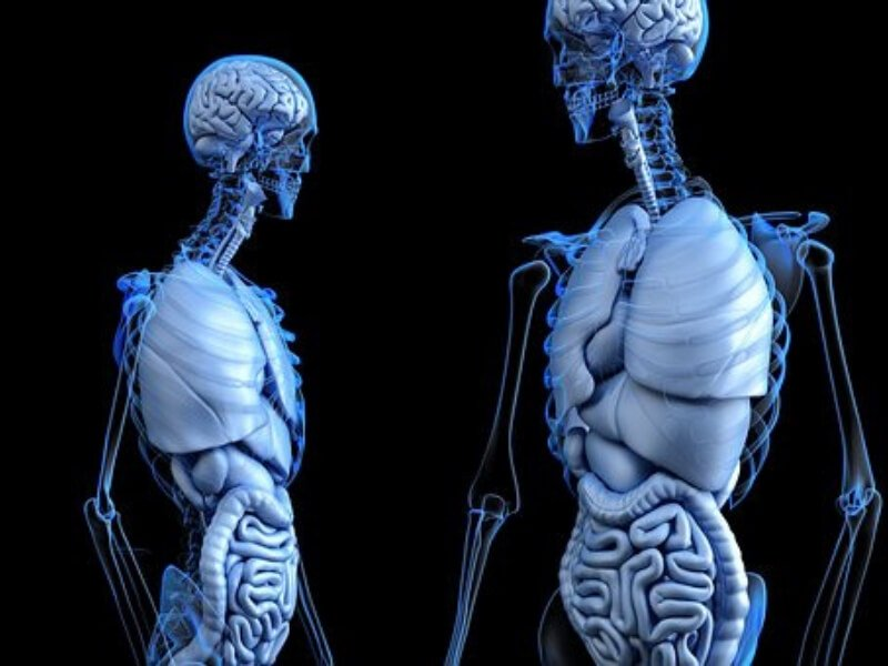 Kako funkcioniše naš organizam?