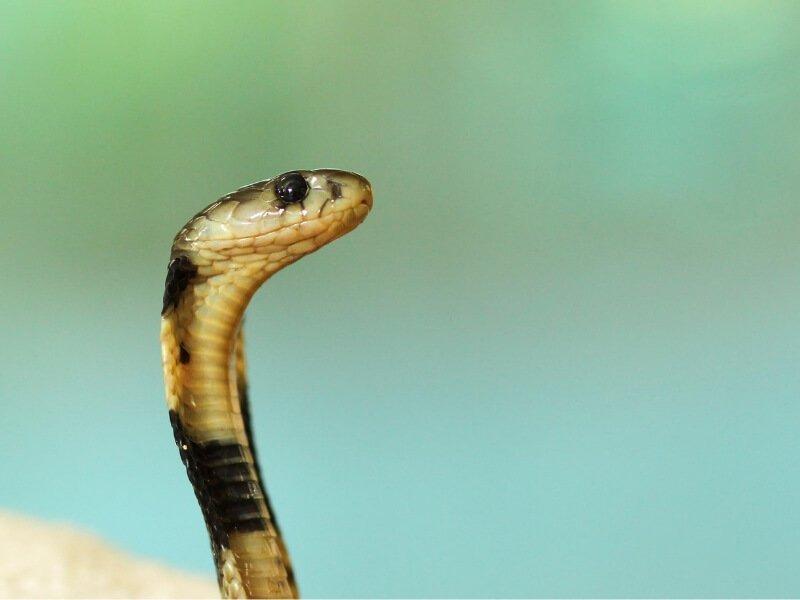 Kako se zaštiti od ujeda zmije