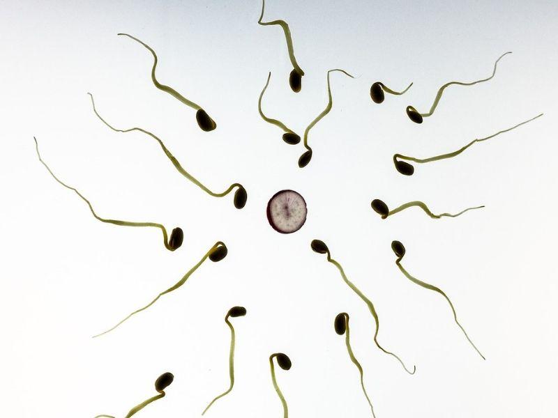 Spermogram - kako se radi i šta otkriva
