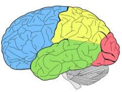 Koristeći skener sa velikom rezolucijom, istraživači iz nemačkog instituta 'Maks Plank' su, u saradnji sa kolegama sa Oksfordskog univerziteta i Londonskog univerzitetskog koledža, uspeli da uoče aktivnost mozga pre nego što je čovek svesno odlučio da će nešto uraditi.