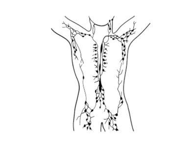 Najčešće bolesti limfnog sistema su limfangitis, limfadenitis i limfedem. Zapaljenje limfnih sudova i žlezda su najčešće posledica povreda i zapaljenja kože, naročito izazvanih stafilokokom i streptokokom.