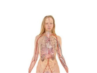 Rane zacele, kosti srastu, bolesti prođu – sve su to poznata čuda našeg tela. Ali zašto se ruka miče sama od sebe, šta je kobno oko ponedeljka, koliko ćelija umre za minut?
