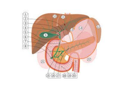 Benigna bilijarna stenoza je u najvećem broju slučajeva posledica hirurške traume. Mnogo ređi uzroci su spoljne tupe povrede abdomena i erozija zidova duktusa žučnim kamencima.