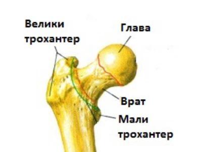 Butna kost je najveća i najduža kost čovečijeg skeleta. Najčešće, povreda, prelom i oboljenje javlja se u delu vrata butne kosti, tj. u delu kuka.